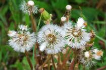 Actie services for Recherche personne pour tondre pelouse